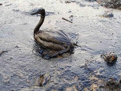 اشكال التلوث على الحيوانات