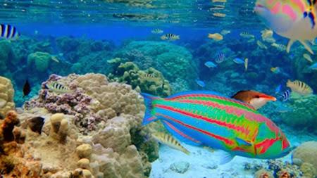 Dote on yourself beautiful island in french polynesia for Bora bora fish