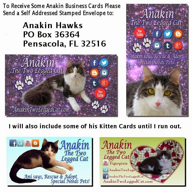 Anakin The Two Legged Cat Business Cards