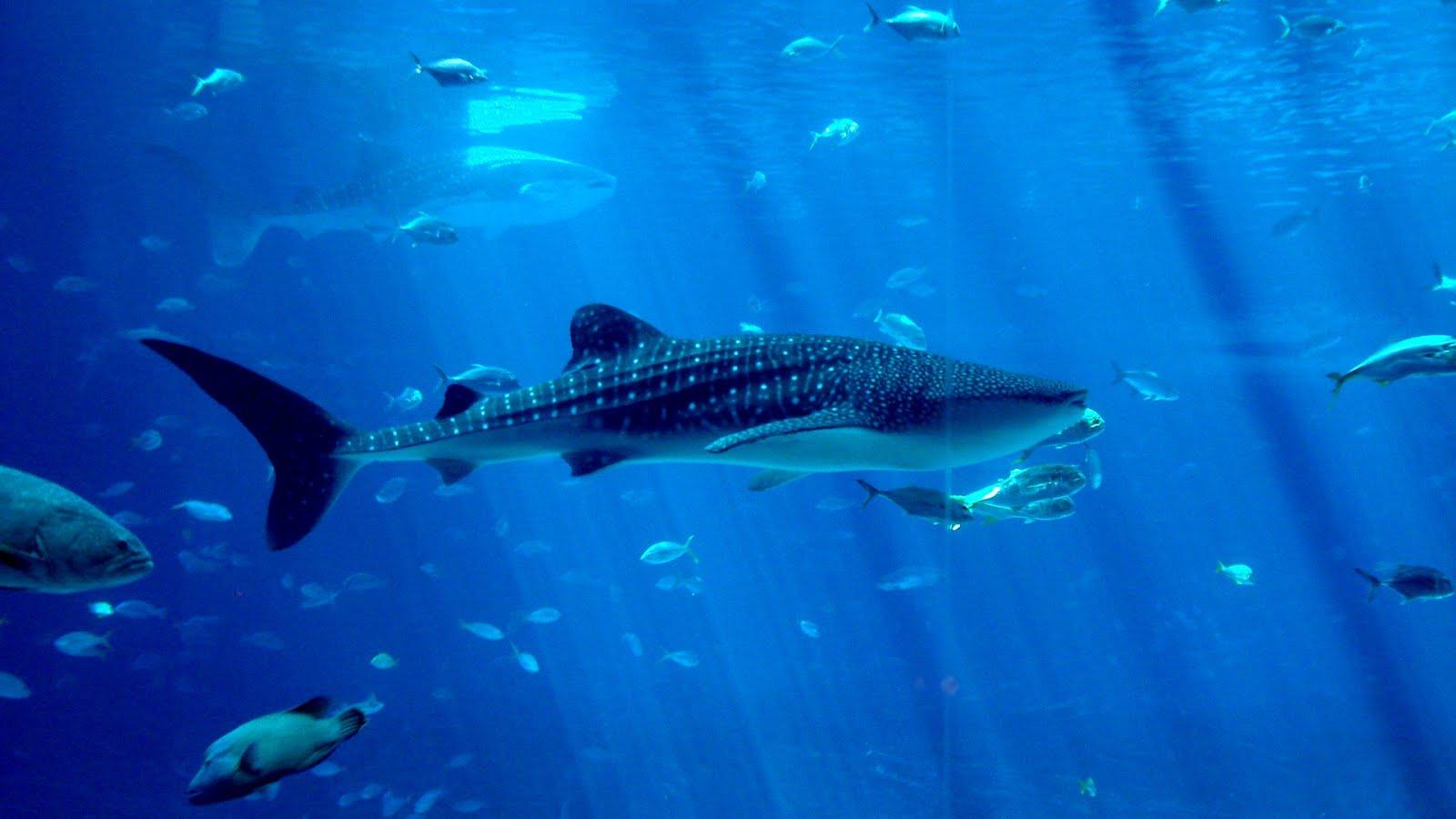 Underwater Creatures Wallpapers