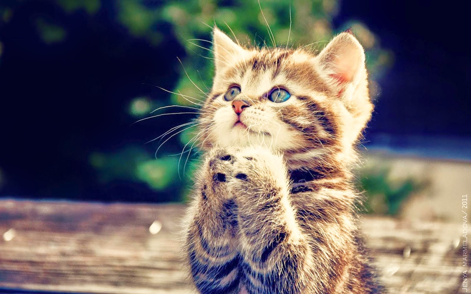ivanildosantos: gambar kucing lucu galau