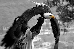 ANIMAL SPIRIT EN WIX