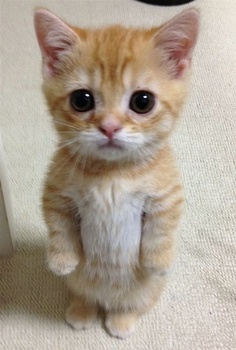 Cute little kitten standing