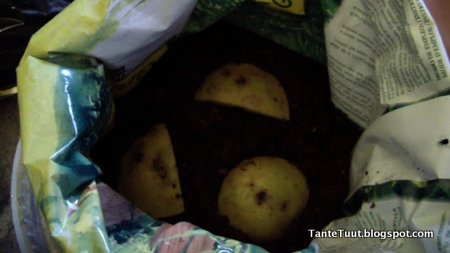 image Aardappelen planten in zakken