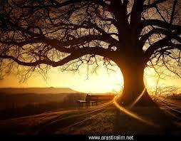 Hayat Ağaç Gibidir Köklenir
