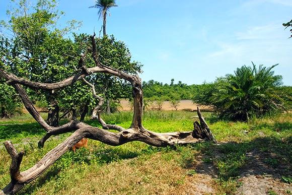 makasutu cultural forest