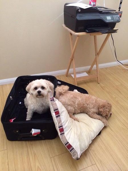 Binatang lucu di koper