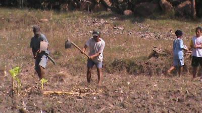 kegiatan penanaman jagung