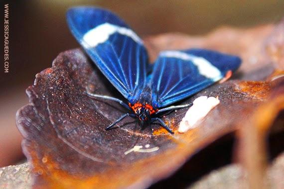 Borboleta azul - Fotografia de Jéssica Guedes