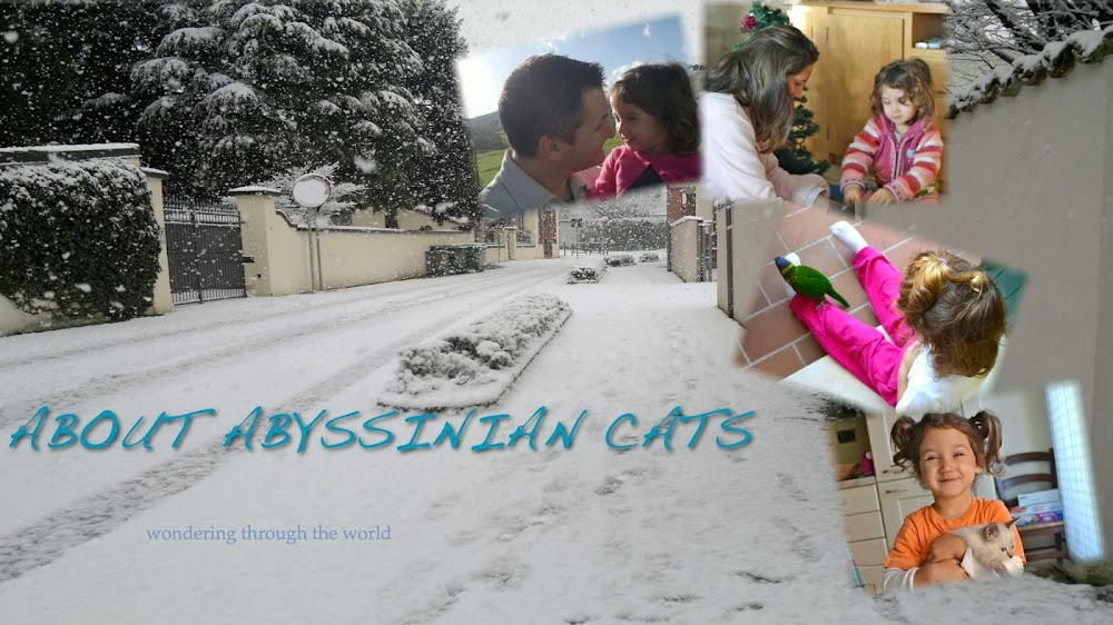 About Abyssinian Cats