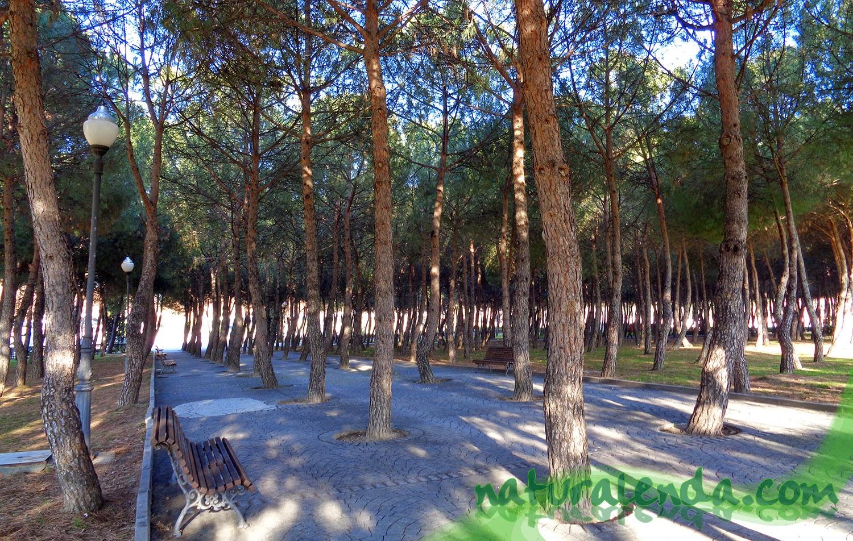 camino entre el pinar