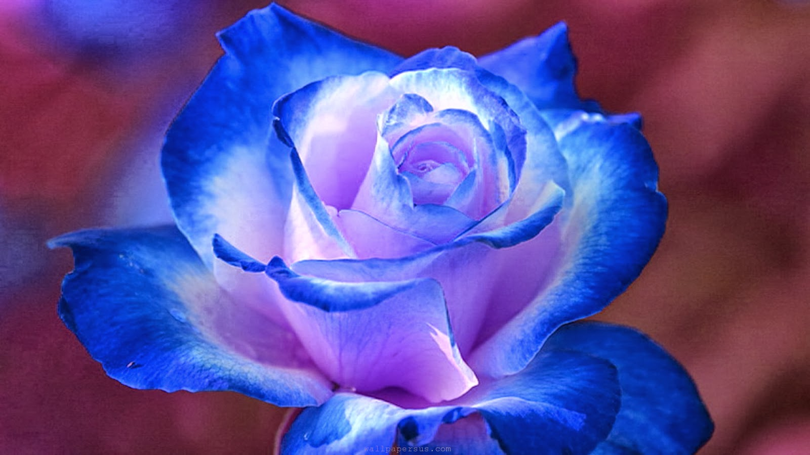 hd wallpapers desktop blue flower hd wallpapers