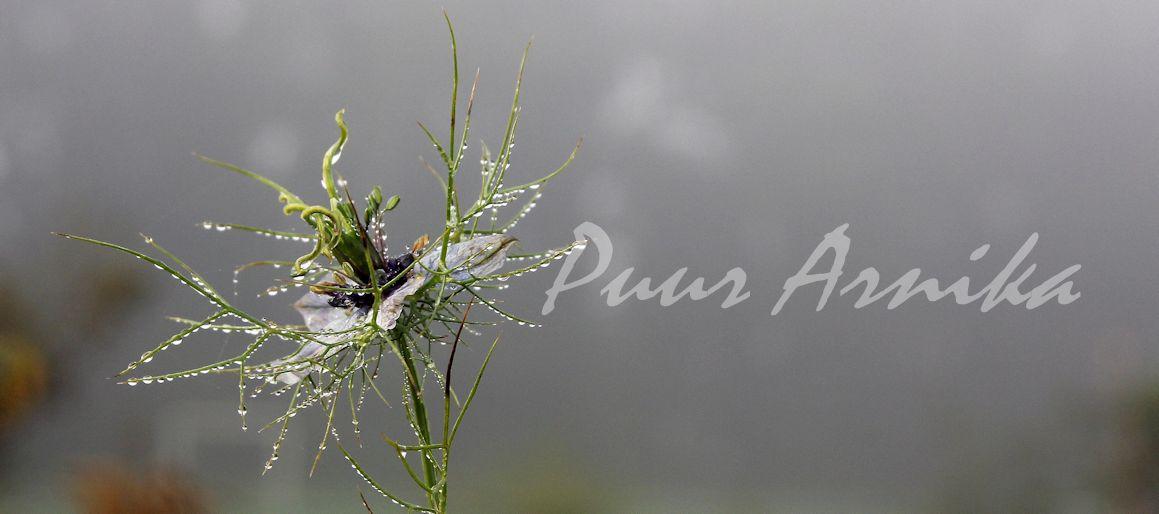 Puur Arnika