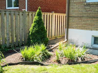Scarborough Toronto back yard cleanup after by Paul Jung Gardening Services