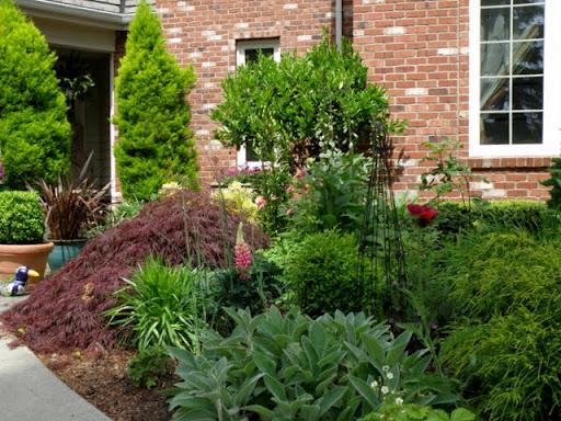 Dr dan 39 s garden tips welcome for Ornamental trees for flower beds