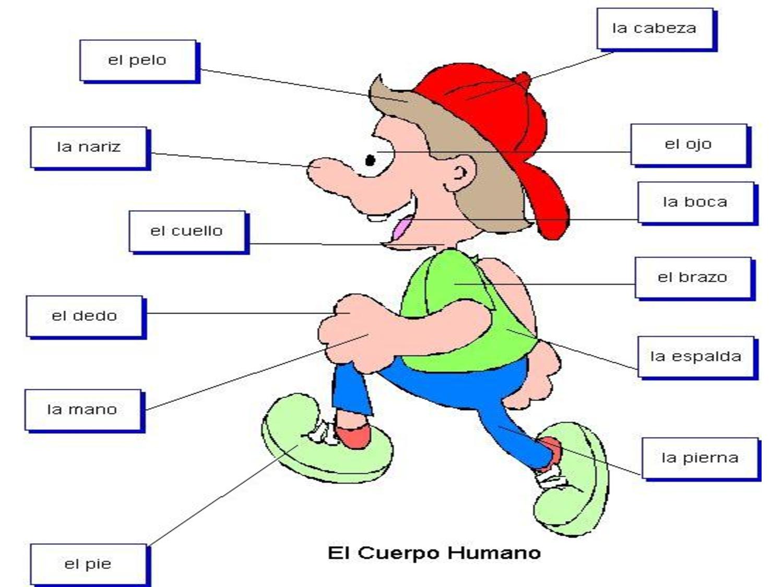 CLASE DE LOS RATONES EXPLORADORES: Imagen del cuerpo humano