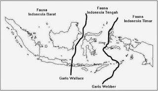 garis weber dan wallace tentang persebaran flora dan fauna di Indonesia