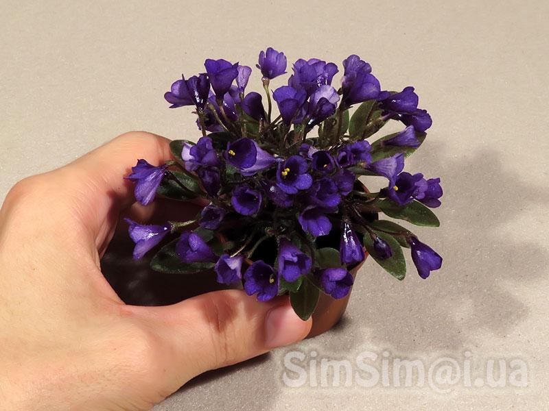 "African Violet ""Vallarta Campanas Moradas"""