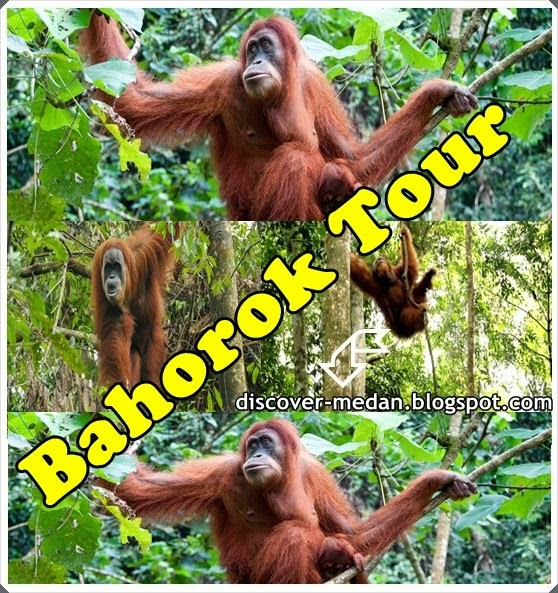 Paket Tour Bukit Lawang