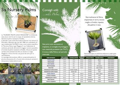 nursery palms, ispra in fiore, palme