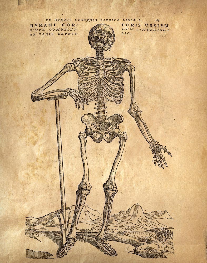 she\'s alice grey: vintage anatomy
