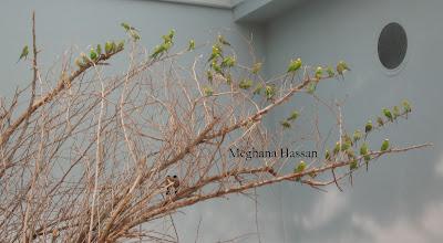 Al Ain Zoo