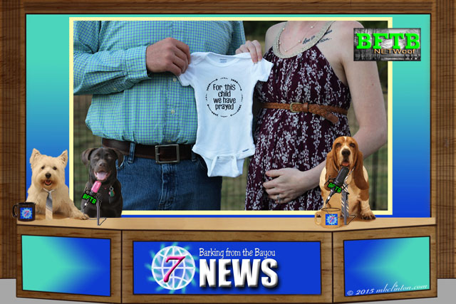 BFTB NETWoof Dog News desk with three dogs