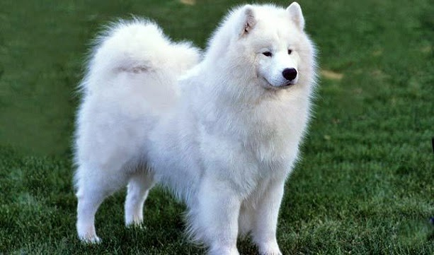 What Is Name Of Oldest Dog Breed