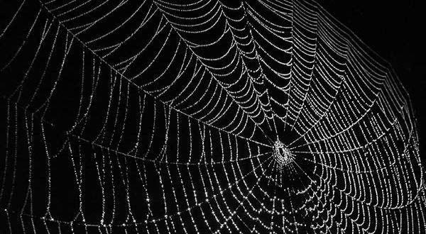 Rahasia Laba-laba Sebagai Keajaiban Dunia