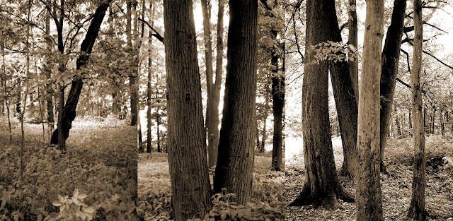 Giełzów, fragment parku z grupami starych drzew. Foto. Paweł Kałwiński.