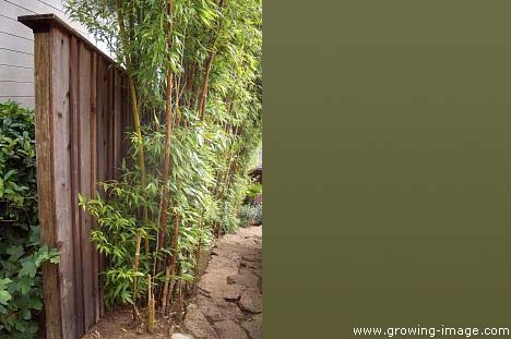 Bamboo Privacy Fencing4
