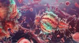 Il sistema immunitario non esiste!