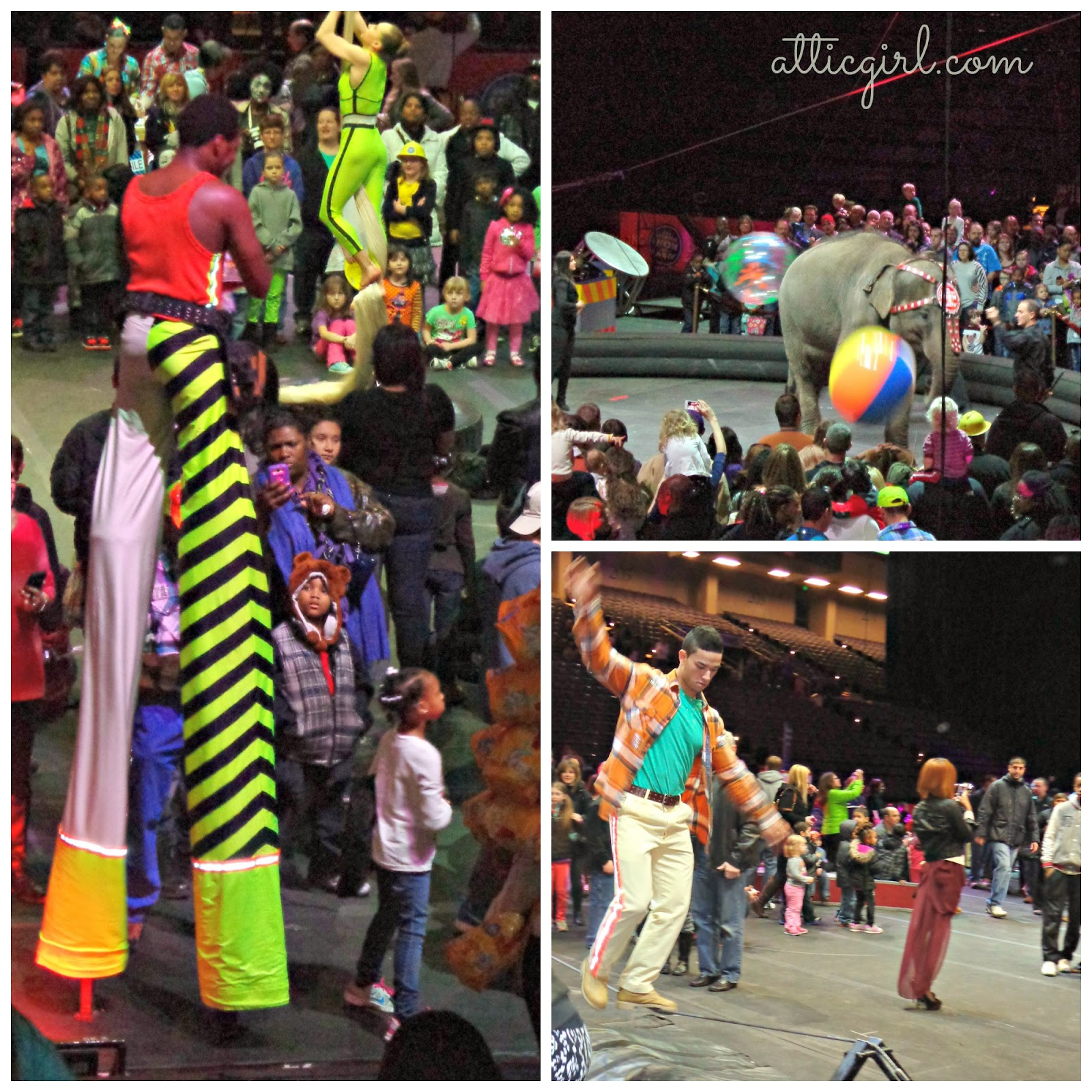 circus, Baltimore, Ringling Bros., Baltimore Arena