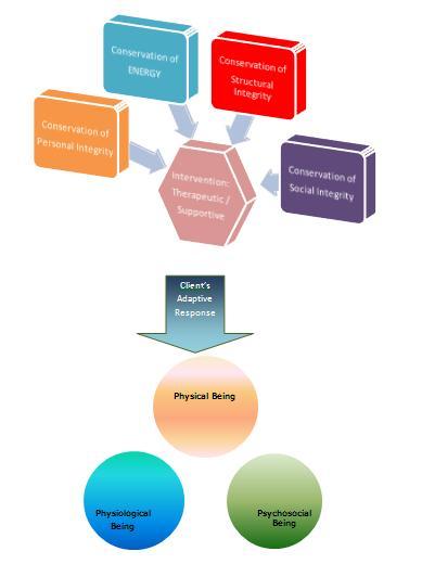 myra estrine levine's conservation theory Myra estrine levine's four conservation principles help form the nursing profession.
