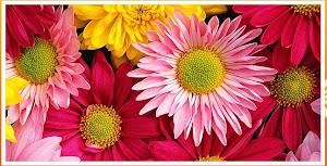 Sneha Florist, Floral Arrangement Service Provider