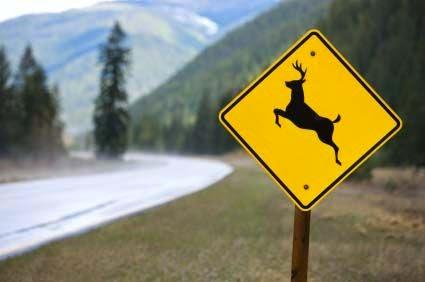 Essential Driving Tips for Deer Season