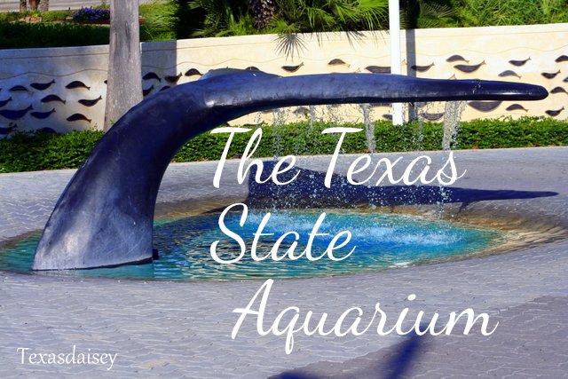 Texasdaisey Creations Texas State Aquarium