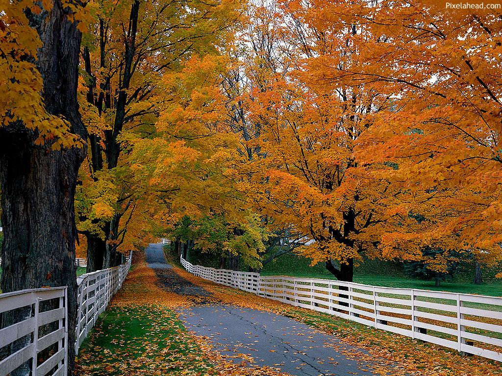 http://3.bp.blogspot.com/-TyxekaawcEA/TwWBBFSqgjI/AAAAAAAAAEg/b4pj2qzlIaA/s1600/Autumn+Wallpapers+HD.jpg