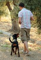 Kısa zamanda köpeğinizi dengeli biçimde eğitin.