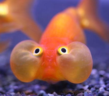 Mascotapetit mi primer acuario for Peces para acuario