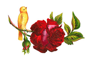bird rose digital images