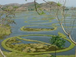 Danau dengan pulau-pulau yang bergerak sendiri di India