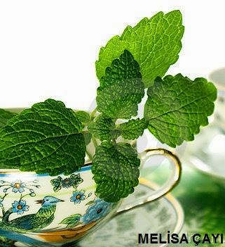 melisa çayının faydaları, melissa tea benefits