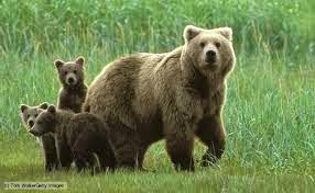Ο Αρκούδος