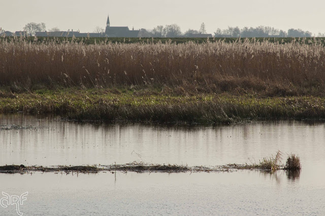 reed, church steeple and water