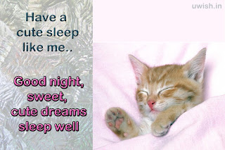 Have a cute sleep like me.,. Good Night,. Cute dreams and sleep well with cat sleeping