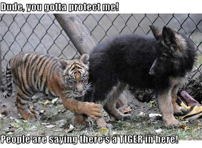 Funny Animal Demotivational Posters Seen On www.coolpicturegallery.us