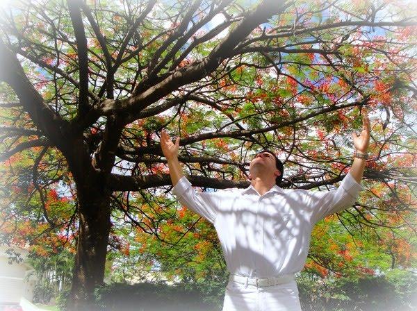 flores no jardim de deus : flores no jardim de deus:FLORES NO JARDIM: AGRADEÇO A TI O MEU AMANHECER
