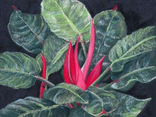 Kath Schifano, card, Botanic garden