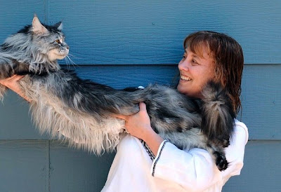 Guinness World Records as the world's longest cat at 48.5 inches